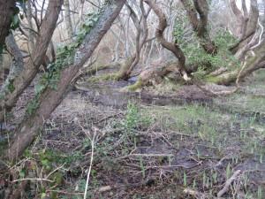Mangrove-5