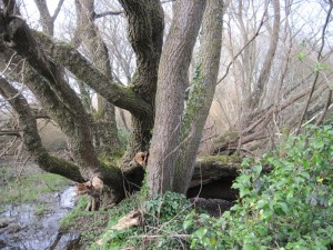 Mangrove-6