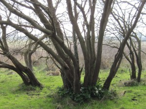 Mangrove-7