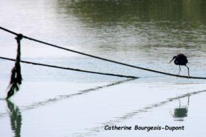 Catherine BD 3
